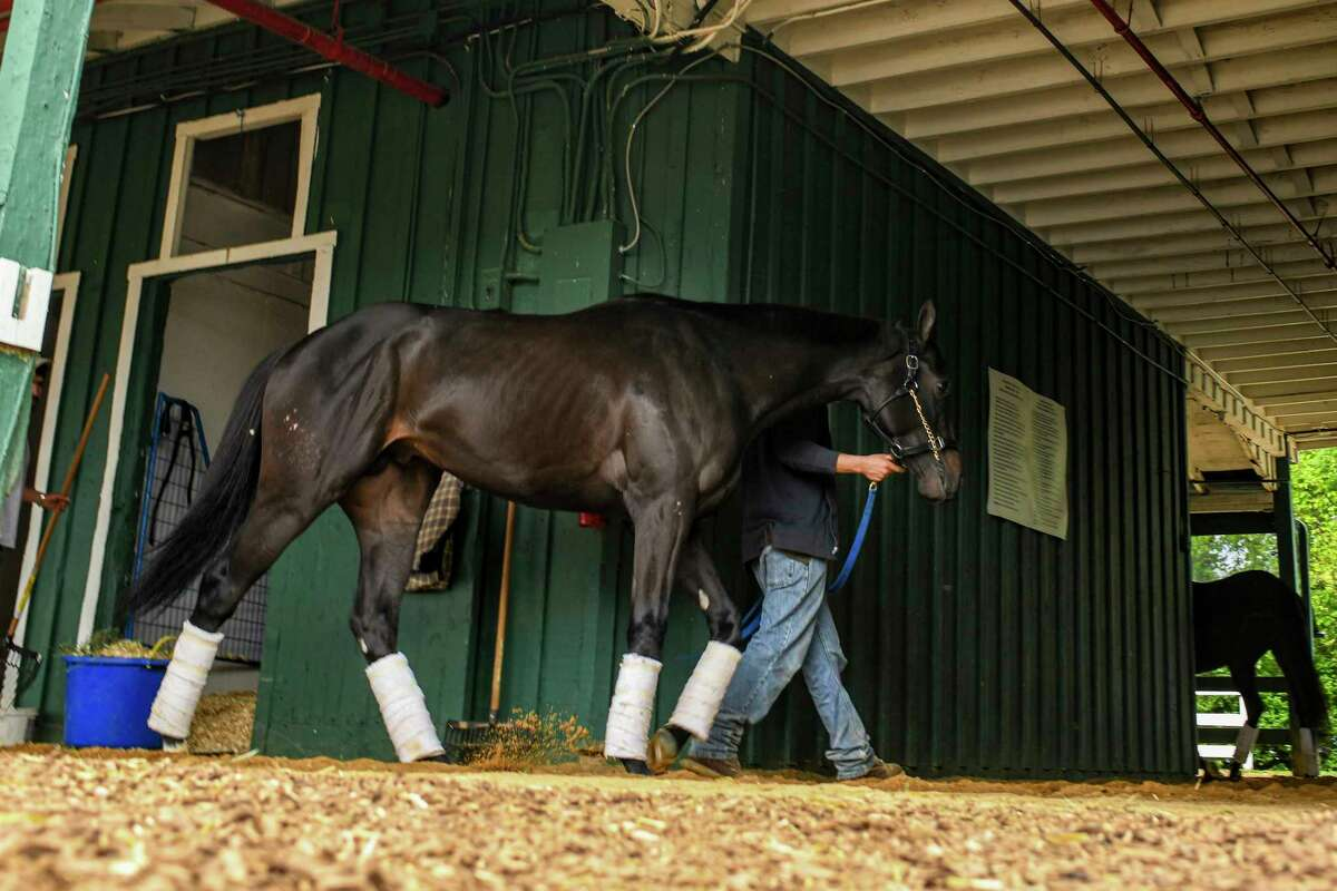 The 2021 Kentucky Derby winner, Medina Spirit, at Pimlico Race Course in Baltimore on Tuesday, May 11, 2021. His trainer, Bob Baffert, said Tuesday, the colt was being treated for dermatitis with an ointment that contained the drug in question, causing Kentucky Derby winner Medina Spirit's positive drug test.