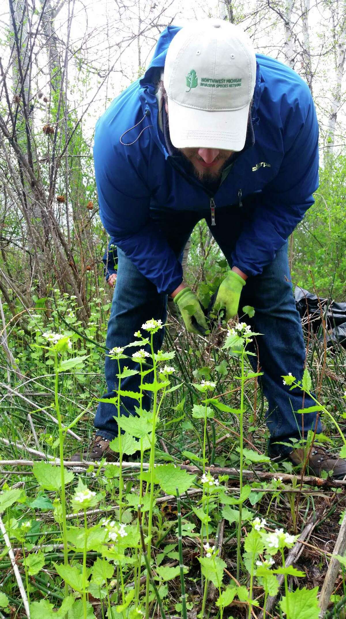 Volunteers with the ISN help pull garlic mustard at a previously held event in 2016. (Courtesy Photo)