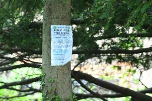 A group of trees are slated for removal at Greenwich High School in Greenwich, Conn. Monday, May 10, 2021. Located east of the football field and tennis courts, the trees are said to be holding back progress on the Cardinal Stadium construction project. An online public hearing is scheduled for May 12.