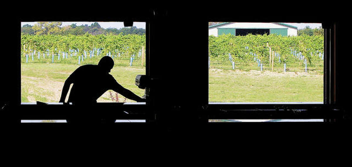 A man is silhouetted by young grape vines growing at Grafton Winery The Vineyards. The 12th Annual Blues Festival is set May 22-23, featuring four acts.