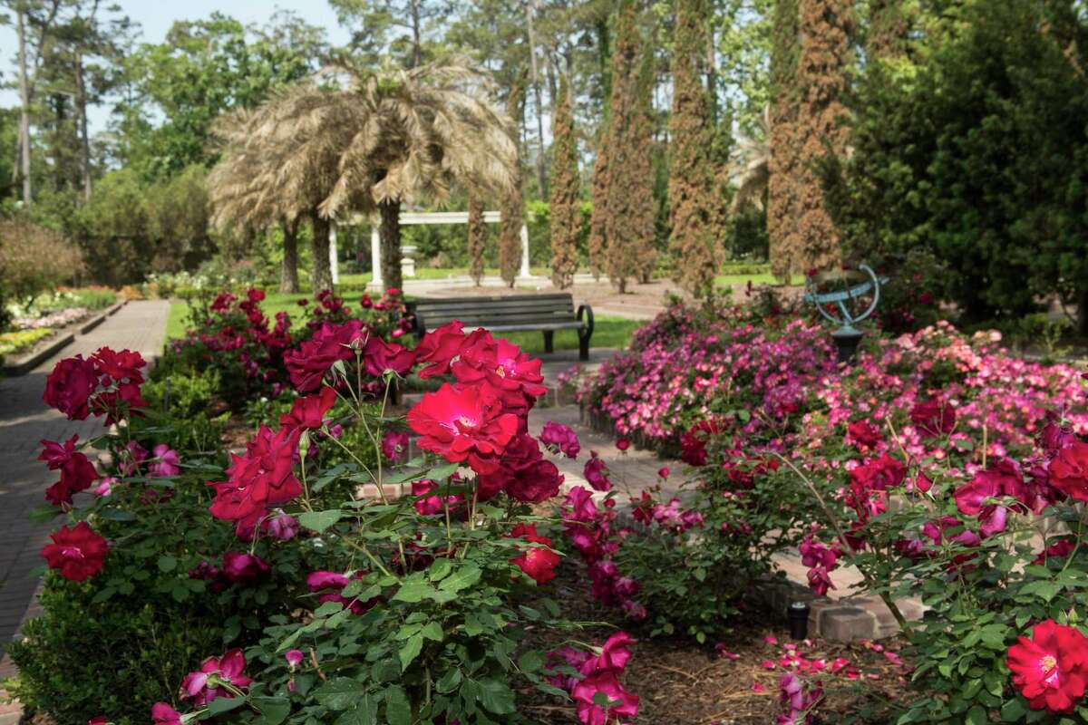 Roses are shown at Mercer Botanic Gardens Wednesday, April 28, 2021 in Houston. The gardens, which are now fully opened, flooded in 2016 during tax day floods and just as it was finishing repairs was wiped out with 20 feet of flooding in Hurricane Harvey.