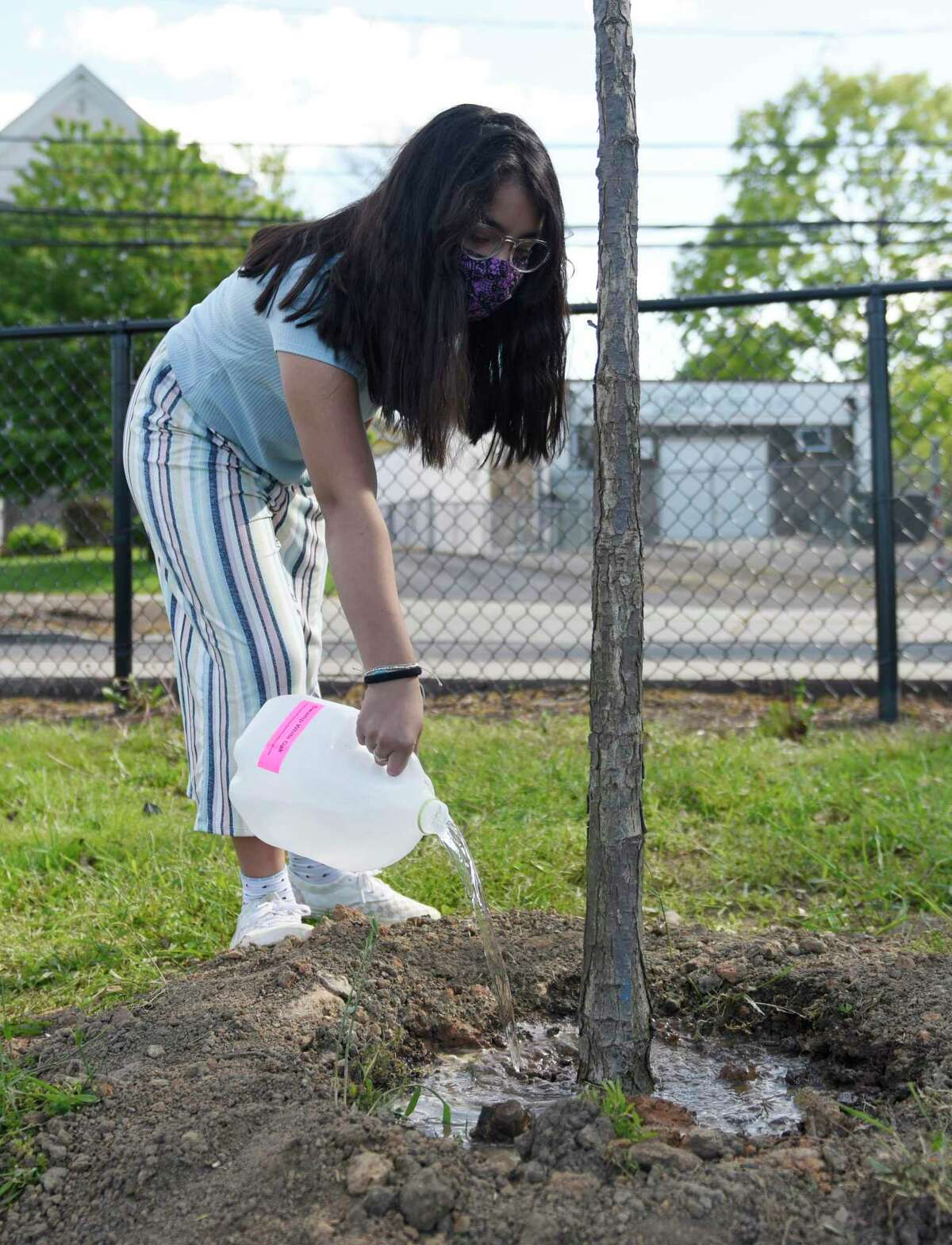 Danna D., 10, waters newly-planted Swamp White Oak trees at Lione Park in Stamford, Conn. Thursday, May 13, 2021. Pollinator Pathway Stamford planted 37 new trees in four Stamford parks starting on Earth Day of this year to help create corridors of pollinator-friendly habitat throughout the northeast. With the help of the Boys & Girls Club of Stamford, the new Red Maples and Swamp White Oaks will be watered by Keystone Club and STEM students.