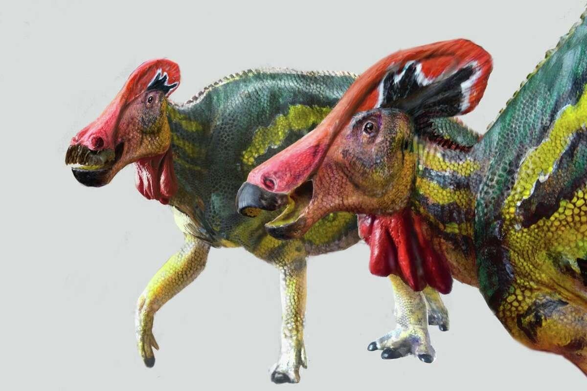 Tlatolophus