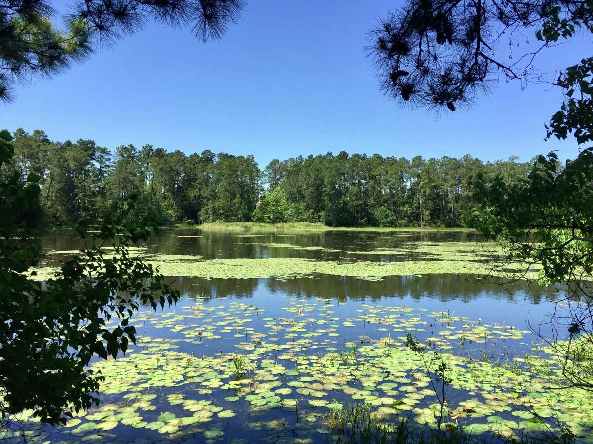 Beaver Pond, part of the Bayou Land Conservancy.