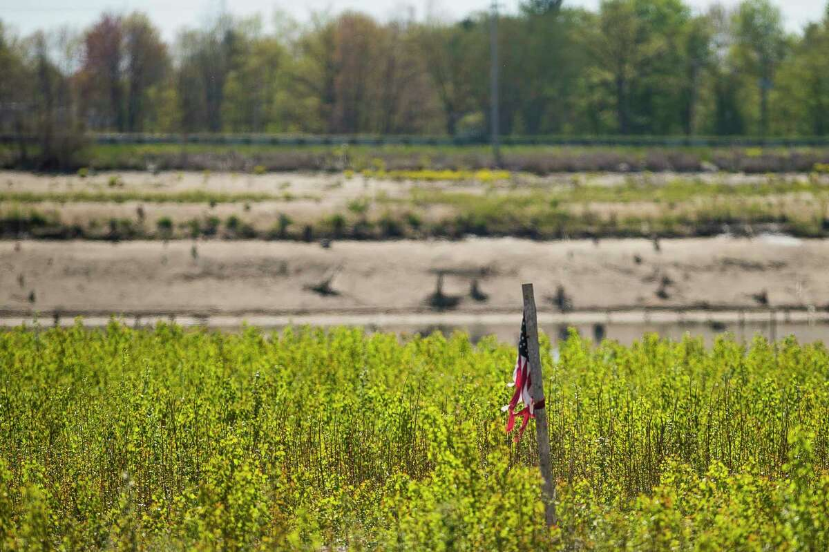 A vast, sandy meadow covers much of the lakebed once covered by Wixom Lake, as seen Friday in Edenville. (Katy Kildee/kkildee@mdn.net)