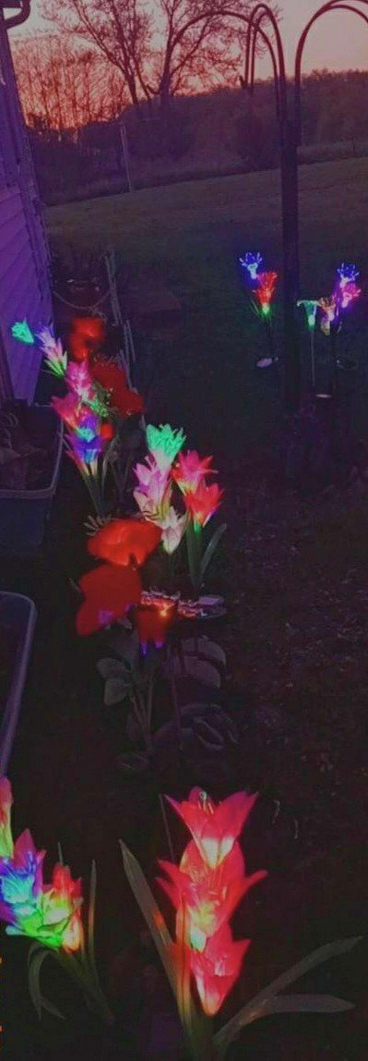 The family lit solar flowers