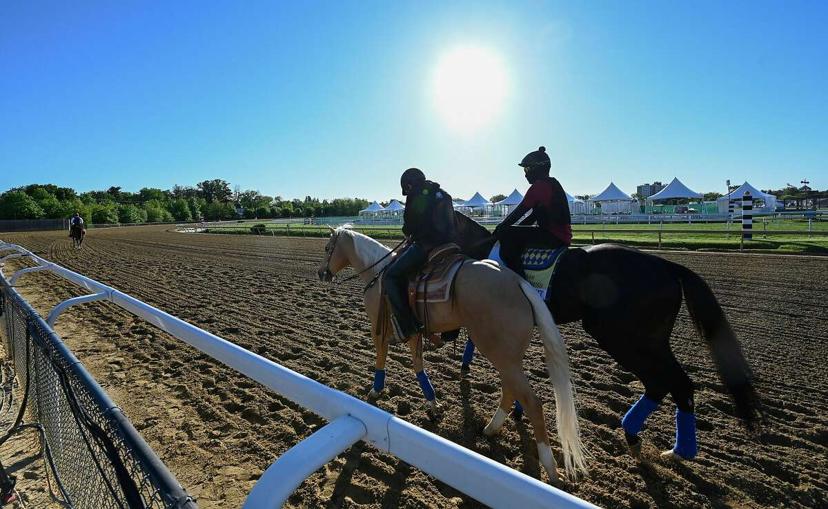 Preakness entrant Medina Spirit heads to the track for morning exercise at the Pimlico Race Track Thursday May 13, 2021 in Baltimore, MD. Photo Special to the Times Union by Skip Dickstein