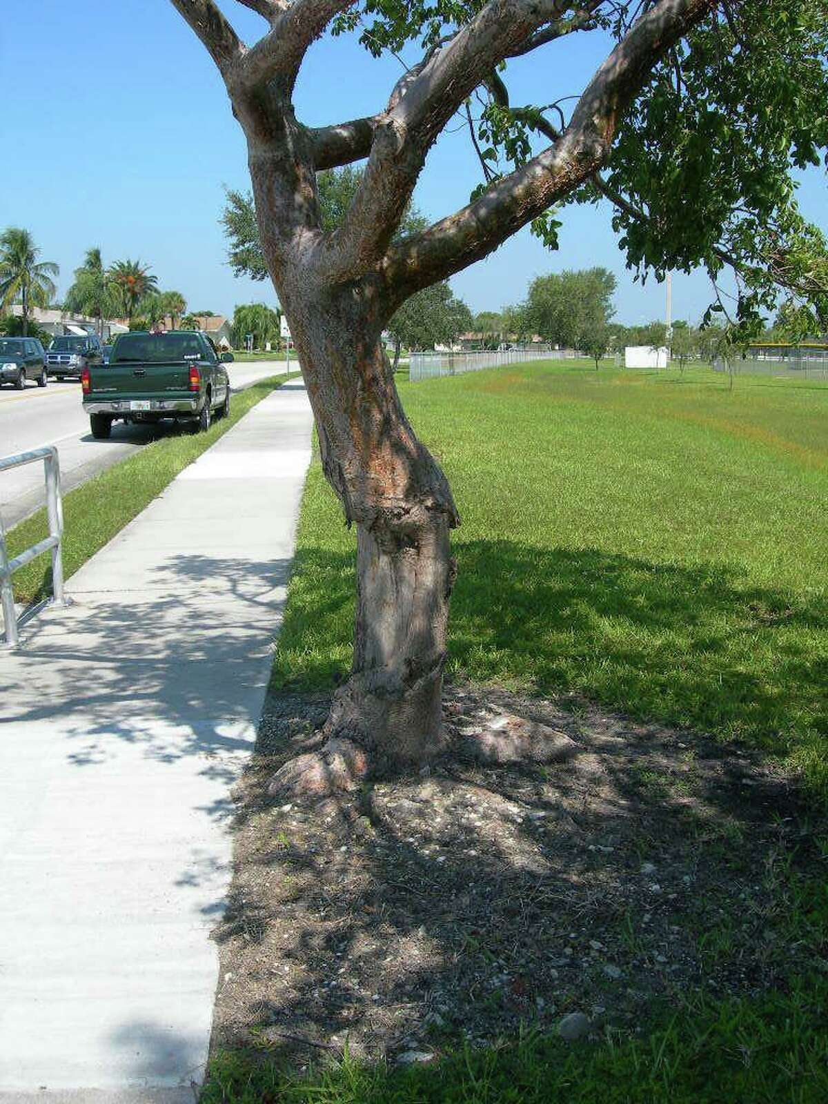 A tree suffering mechanical damage due to landscaping.