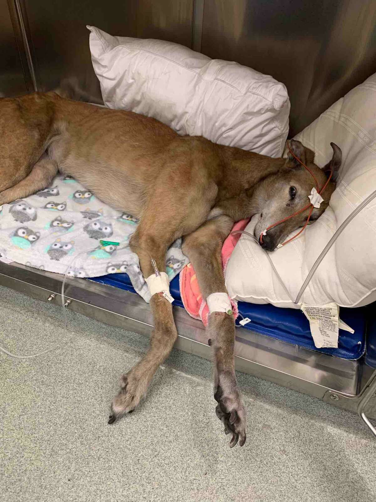 Several dogs were rescued from a fire in a Ridgefield Home on May 15, 2021 and are being given medical attention.