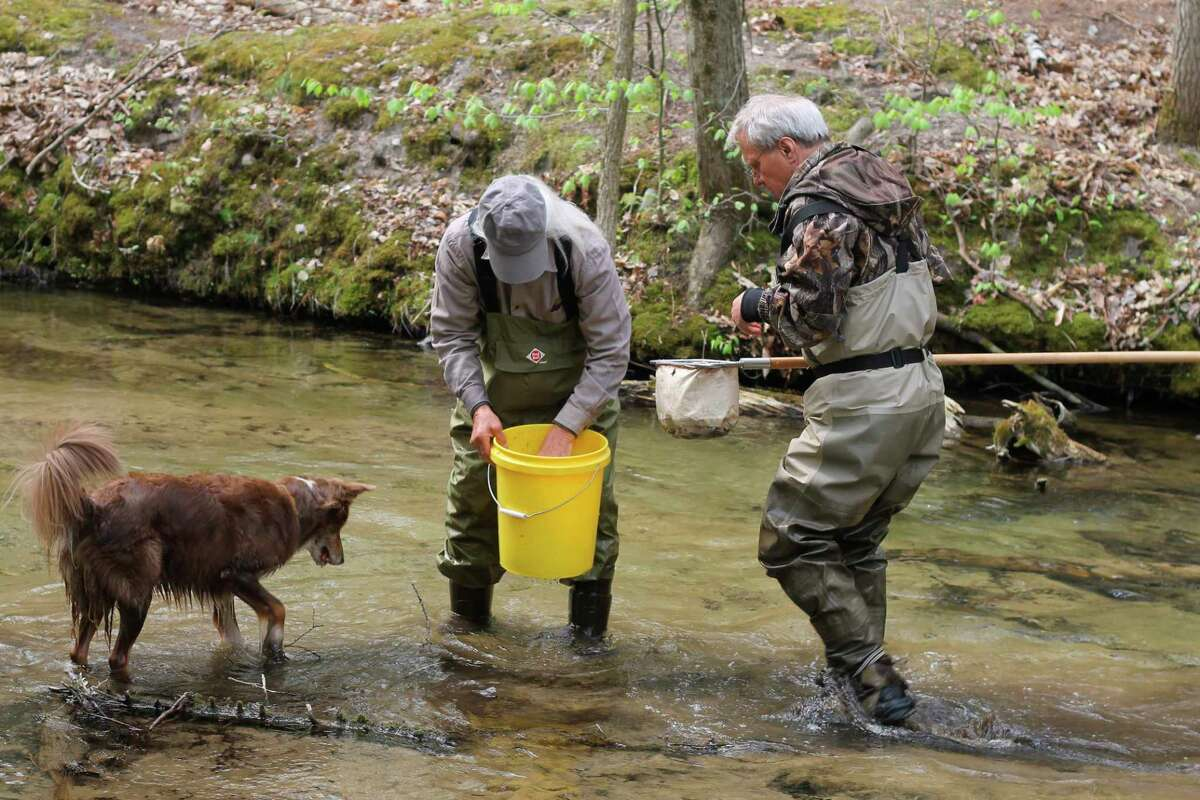Dick Rogers (left) and Armas Soorus collect macroinvertebratesto help determine water quality in the Lower Manistee River Watershed as part of the Manistee Conservation District's volunteer stream monitoring program. (Kyle Kotecki/News Advocate)