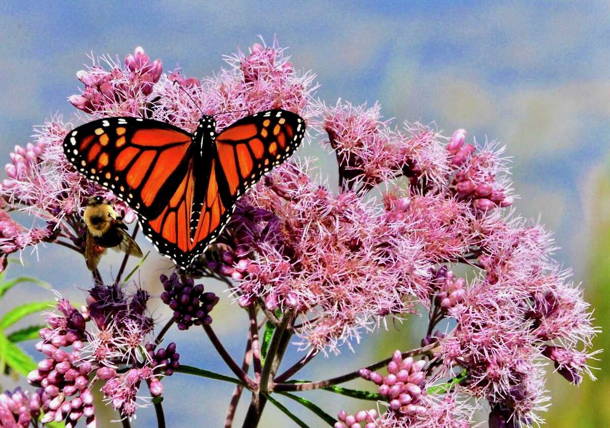 This photo of a butterfly provides an example of the rule of thirds; it also leaves space for movement. (Courtesy photo/Ann Burrell/Manistee Camera and Photo Art Club)