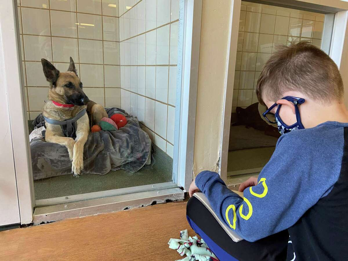 Tristan Davis, who turns 10 this month, reads to a dog during story time at Citizens for Animal Protection in west Houston. Reading to the animals helps calm them as they wait to be adopted.