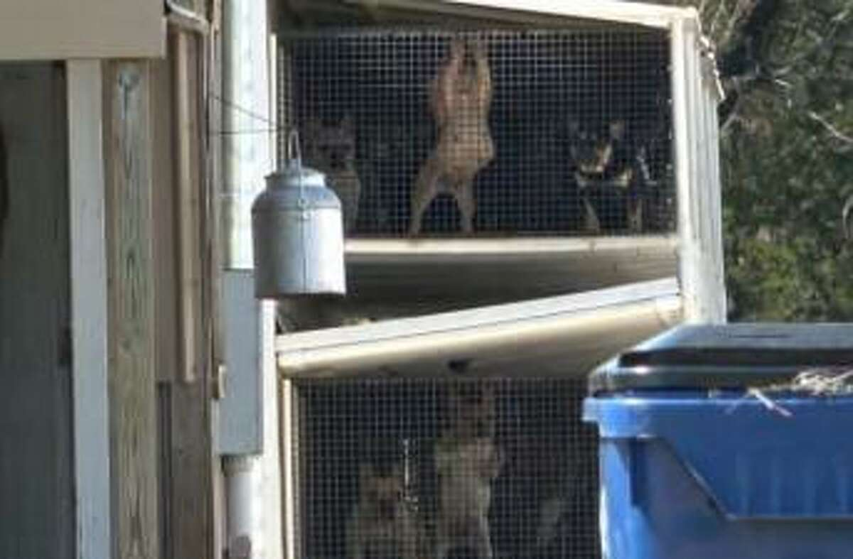 These puppies, kept in cramped, stacked crates, were sold to Petland, according the Humane Society of the United States.