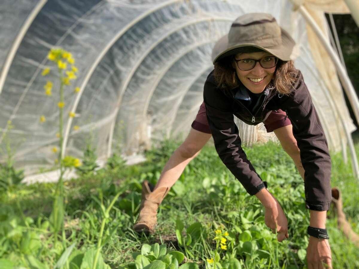 Elizabeth Whitman is harvesting baby bok choy in a very weedy hoop house