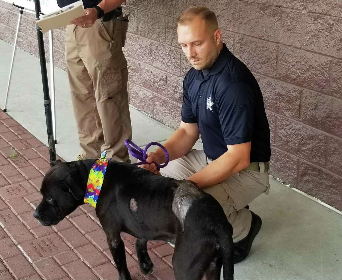 Montgomery County Animal Shelter Director Aaron Johnson is seen Monday at the Conroe facility with Zorro, who was recently shot with arrows.