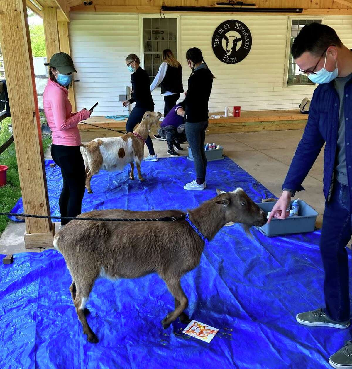 Bradley Mountain Farm offers painting sessions with goats.