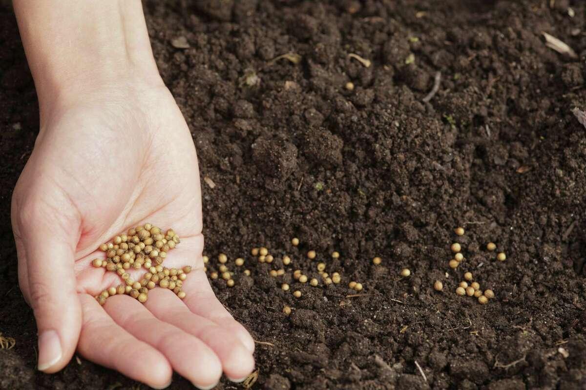 Seeds for a garden.