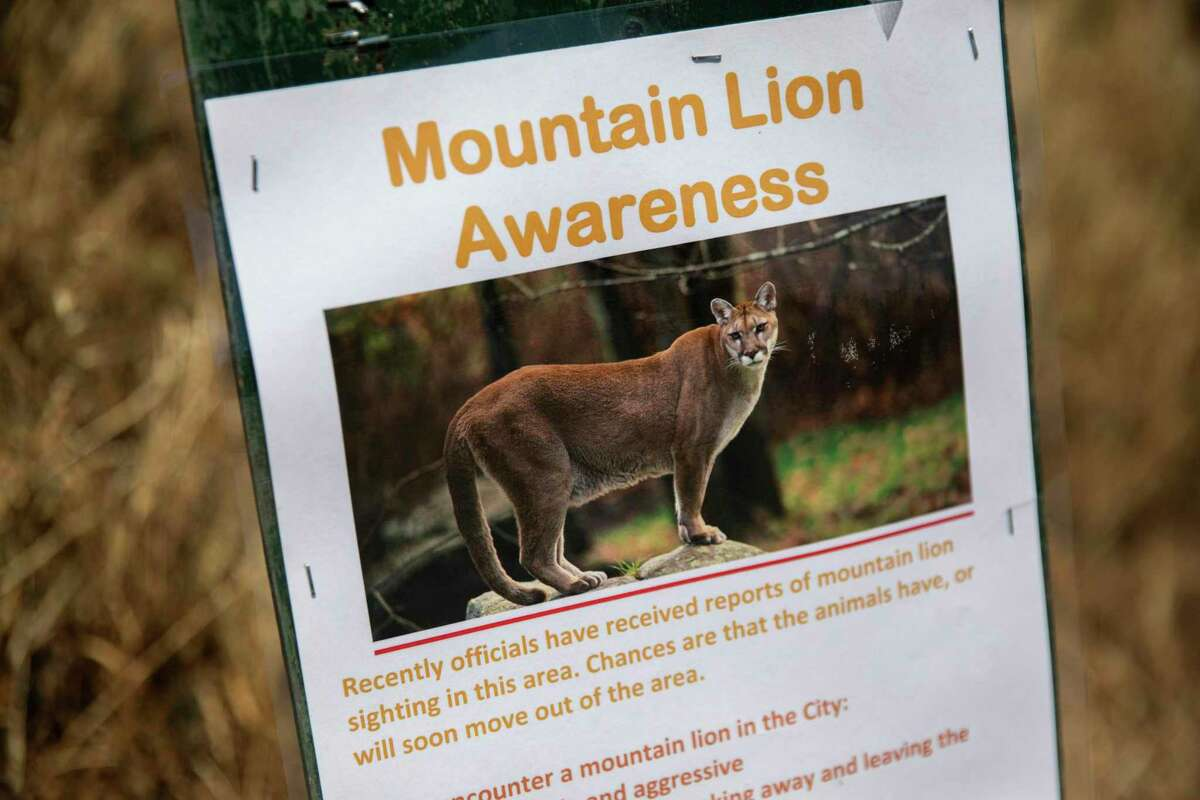 A sign at Bernal Heights Park, Tuesday, May 18, 2021, in San Francisco, Calif. Signs at the entrances to the park report a mountain lion was sighted in the area. The lion was captured late Wednesday.