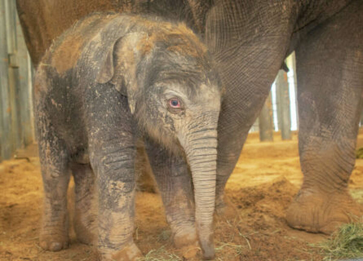 The Houston Zoo welcomed a new addition on Sunday.
