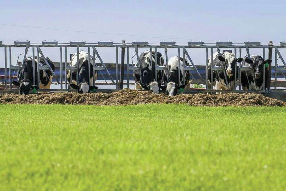 The Huron County Planning Commission heard from Rev LNG representatives atitsmonthly meeting. The companywants to install digesters that use dairy cow manure to create natural gas. (Metro Creative Graphics/File Photo)