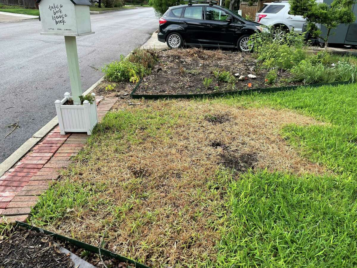 San Antonio resident Kate Griffin's lawn appears to have been sprayed with herbicide after the May election. Dozens of other residents reported similar damage.