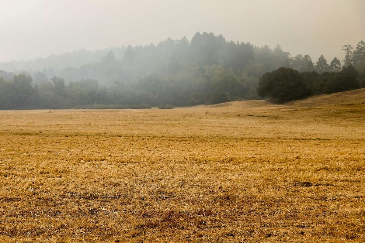 Climate change has been a key driver for drier conditions, which have contributed to lengthening fire seasons.