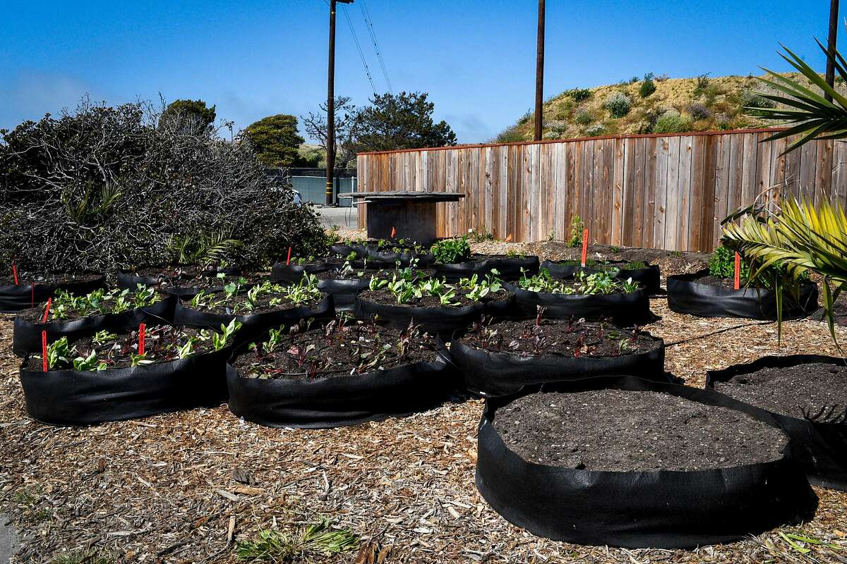 A garden at the Ship Shape Community Center on Treasure Island, sponsored by the nonprofit One Treasure Island.