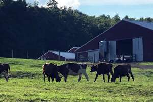 Spectrum/Kimberly Farm at 415 Chestnut Land Road in New Milford was established in 1955 by Howard Kimberly. Among the items sold in its retail store are different flavors of milk and yogurt, vegetables and more. July 2020
