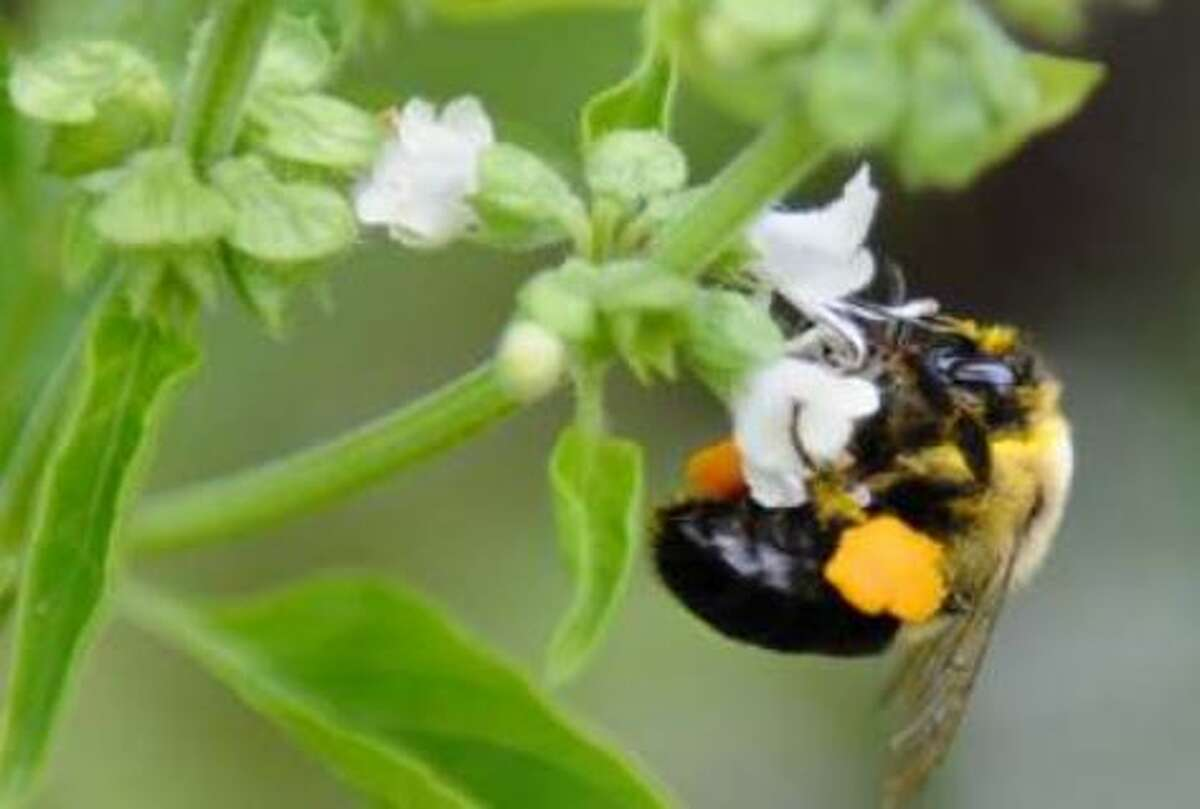 Sides are squaring off over pesticide-treated seeds which could protect farm crops but harm bees.