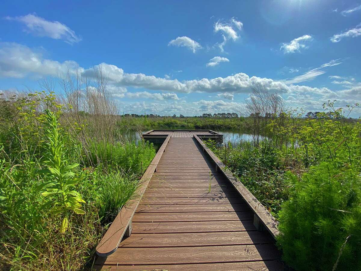 Plan a visit to Katy Prairie Conservancy's Indian Grass Preserve to see birds, butterflies, dragonflies, and wildflowers. Photo Credit: Kathy Adams Clark. Restricted use.