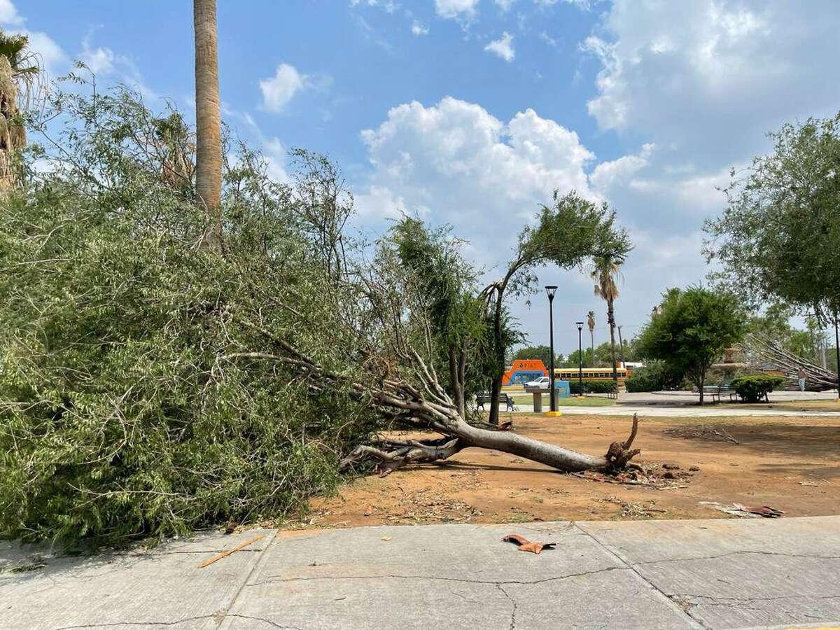 Encontraron en parques ramas caídas lo suficientemente grandes como para bloquear el acceso al equipo del departamento, lo que llevó a los equipos a mover los escombros a mano antes de comenzar la limpieza.