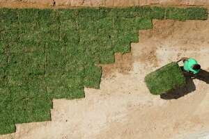 A man wheels pallets of sod between homes in a newly built neighborhood in Granger Pines, Tuesday, April 20, 2021, in Grangerland.