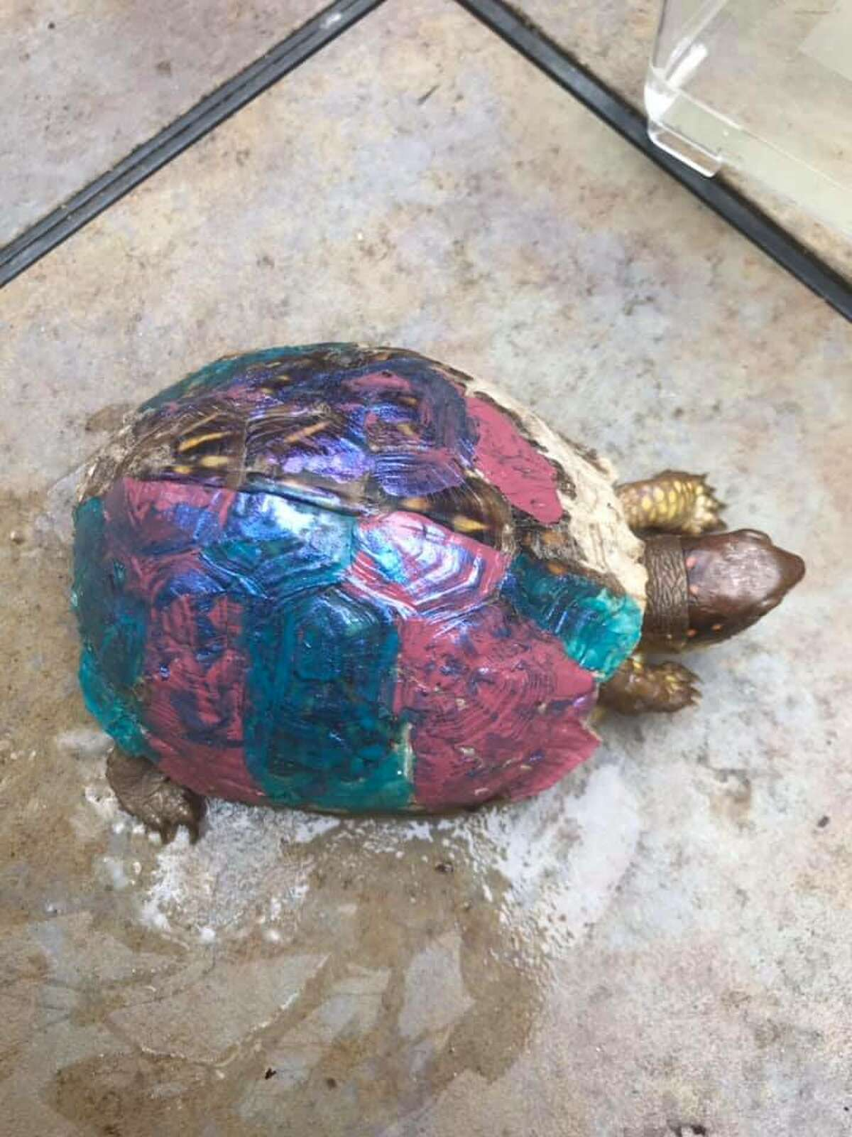 Friends of Texas Wildlife is asking Texans to not paint their turtles after receiving a poor box tortoise covered with many coats of nail polish on its shell.