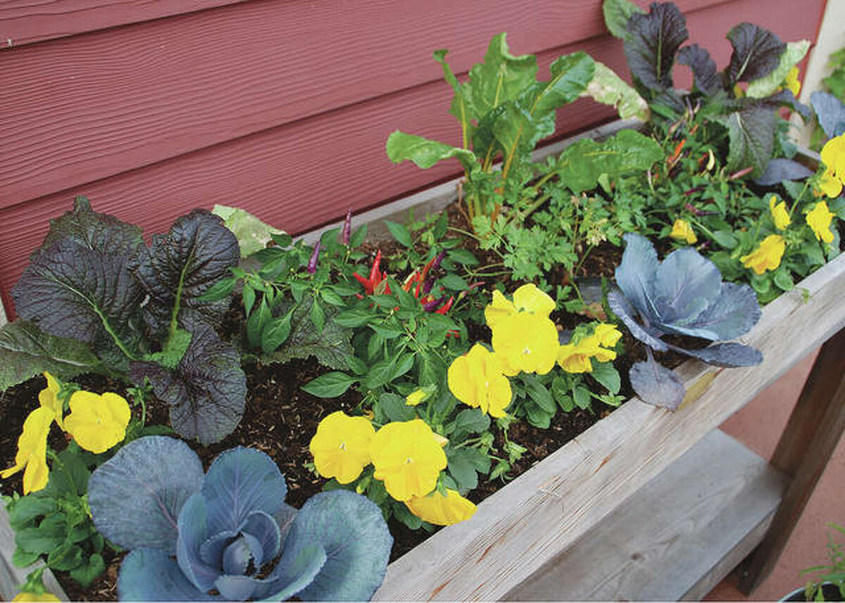 Get the most out of your elevated garden by spacing plants just far enough apart to reach their mature size.