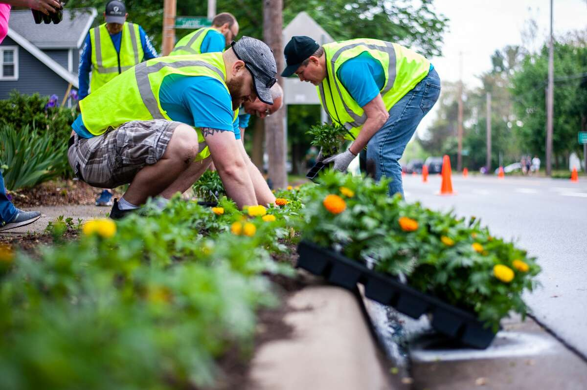Tom Rosencrants with the Great Lakes Bay Construction Company plants flowers during the Midland Blo0ms event on Saturday, May 22, 2021 along Eastman Avenue (Andrew Mullin/AMullin@hearstnp.com).