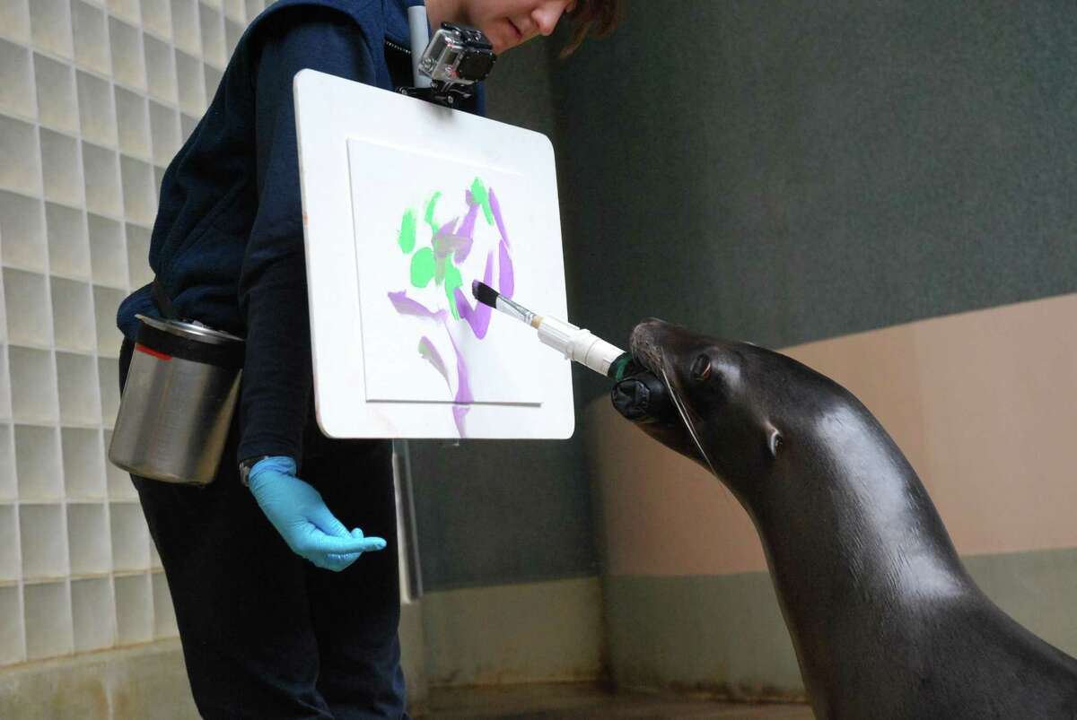 The Mystic Aquarium offers a program where people can paint with a sea lion.