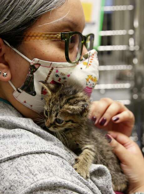 San Antonio Animal Care Services Education Coordinator Josie Espinoza comforts a kitten in the cattery of the shelter. Photo: Jerry Lara/Staff Photographer / **MANDATORY CREDIT FOR PHOTOG AND SAN ANTONIO EXPRESS-NEWS/NO SALES/MAGS OUT/TV   © 2019 San Antonio Express-News
