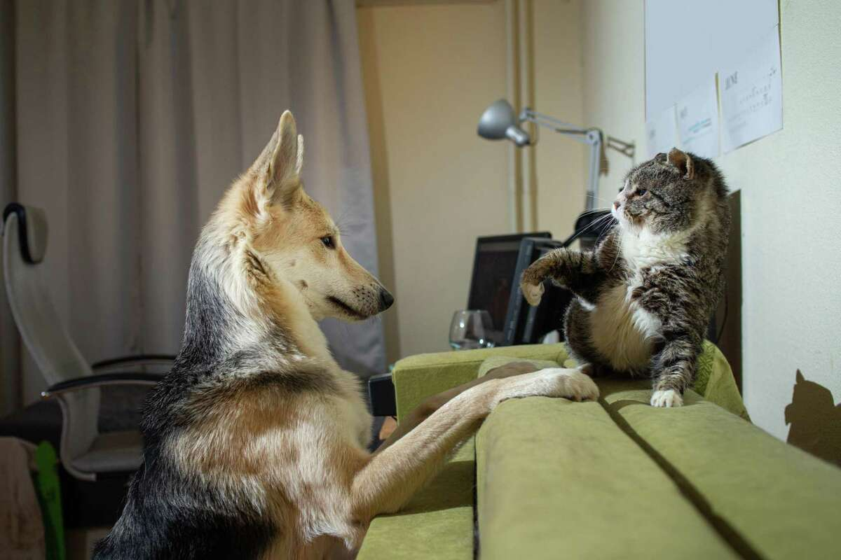 If you make introductions slowly, you will help your dog and cat learn how to get along.