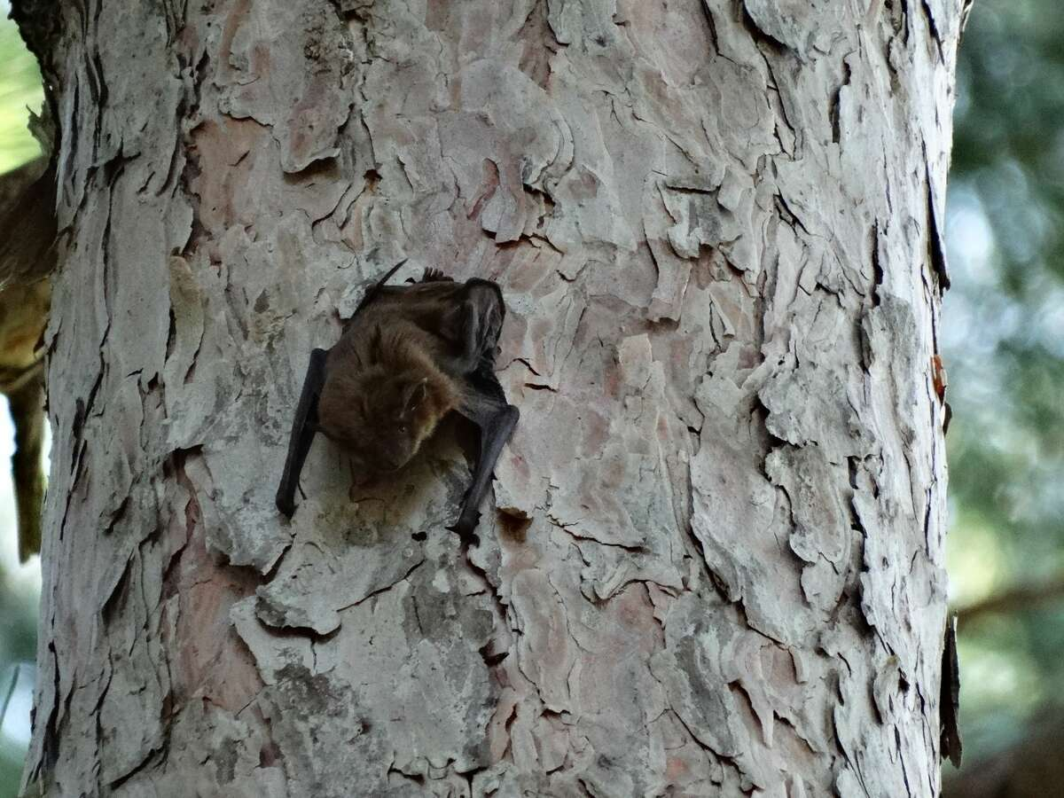 Visitors were able to learn about bats and observe them in their natural habitat during a Bat Hike on Tuesday June 29 at Chippewa Nature Center.