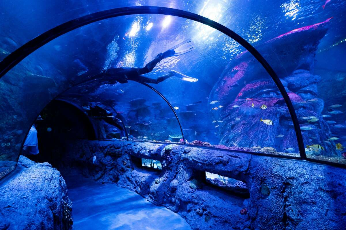 SeaLife SA is now open. Here's what to know.