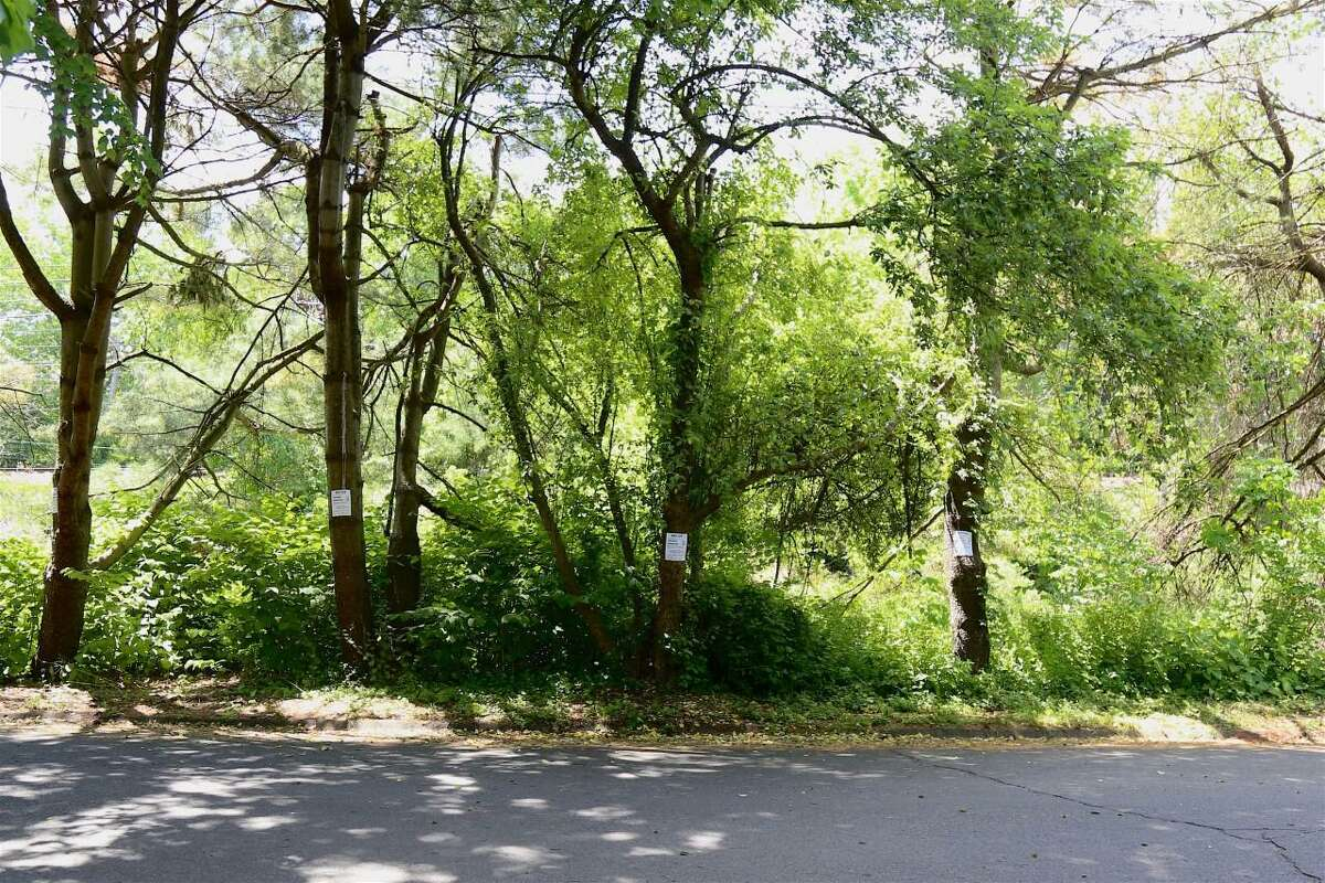 Some of the 40 trees are posted for removal along Little Brook Road in Darien.