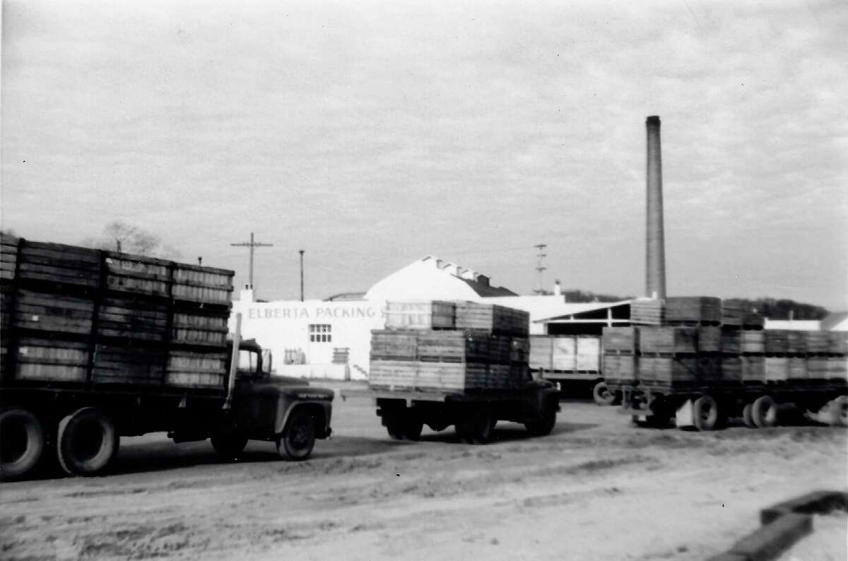Trucks wait in line to off-load fruit at the Elberta Packing Co., circa 1960. (Courtesy Photo)