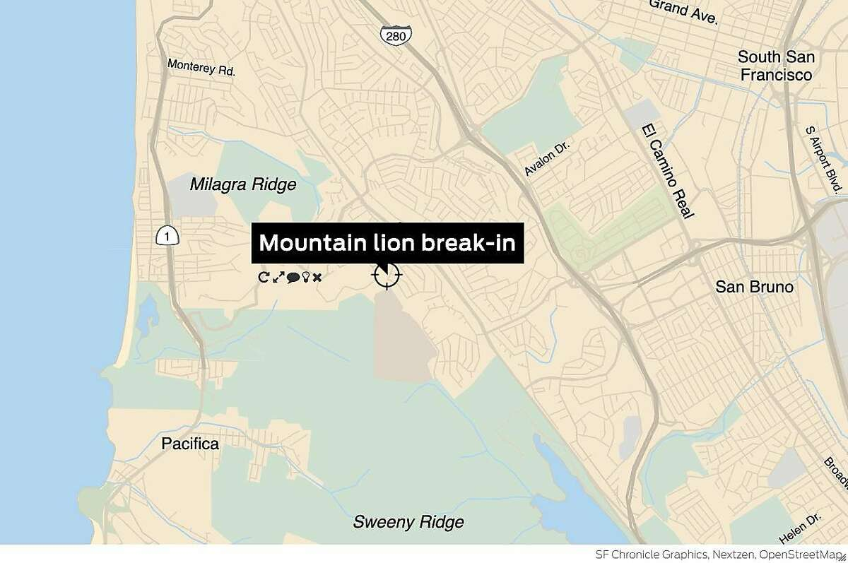 A mountain lion broke a window and prowled through a home in San Bruno early Tuesday, authorities said.