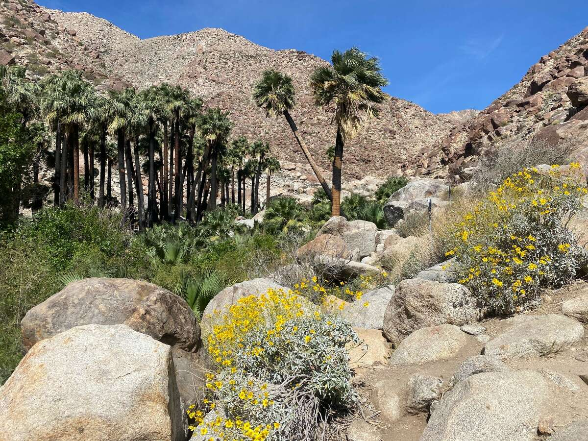 A view of the Palm Canyon oasis in Anza-Borrego Desert State Park.