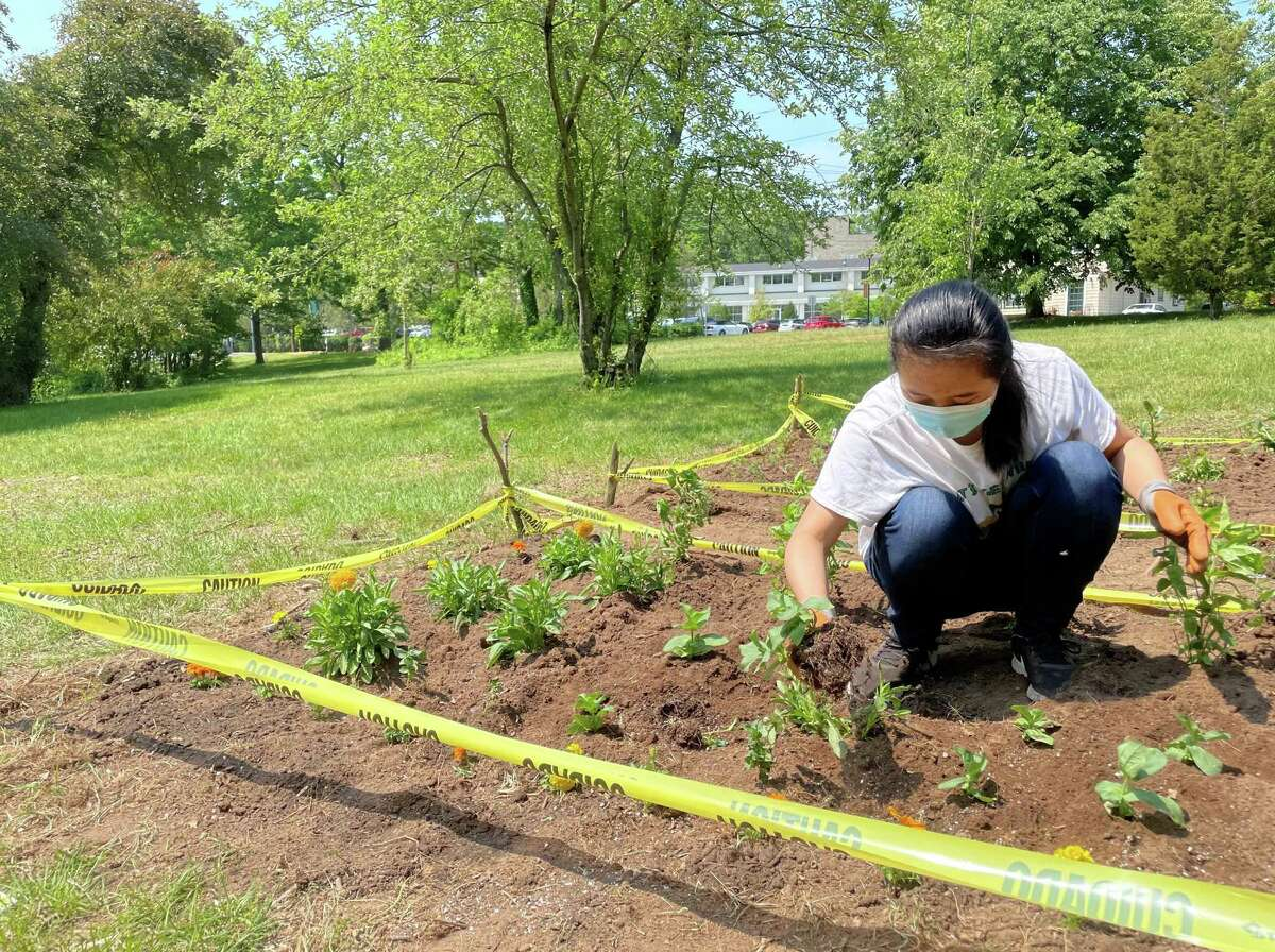 Ruth Wang, a senior at Hamden Hall Country Day School, helps plant a pollinator garden at Eli Whitney Park in Hamden Wednesday, May 26, 2021.