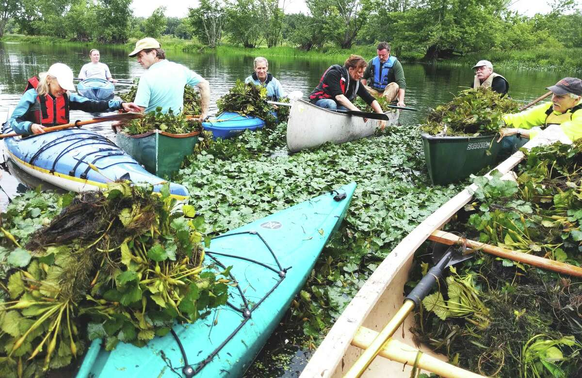 Volunteers remove water chestnut from the Mattabesset River during a past Paddle With A Purpose event hosted by The Jonah Center and the Connecticut River Conservancy in Middletown.