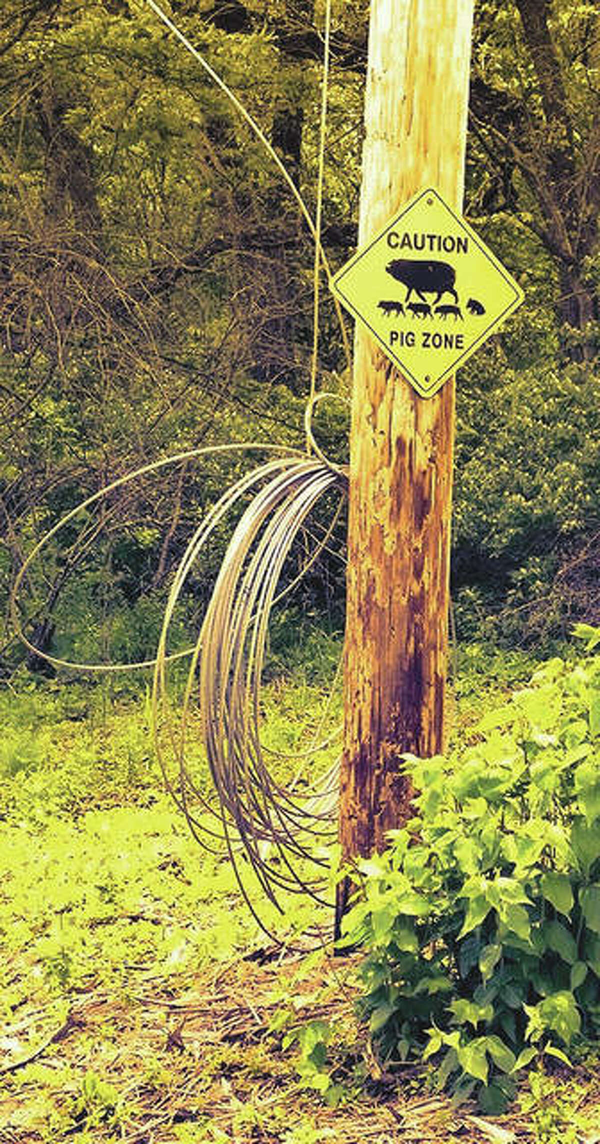 A leftover sign from a bygone time cautions people to watch for pigs in eastern Pike County.