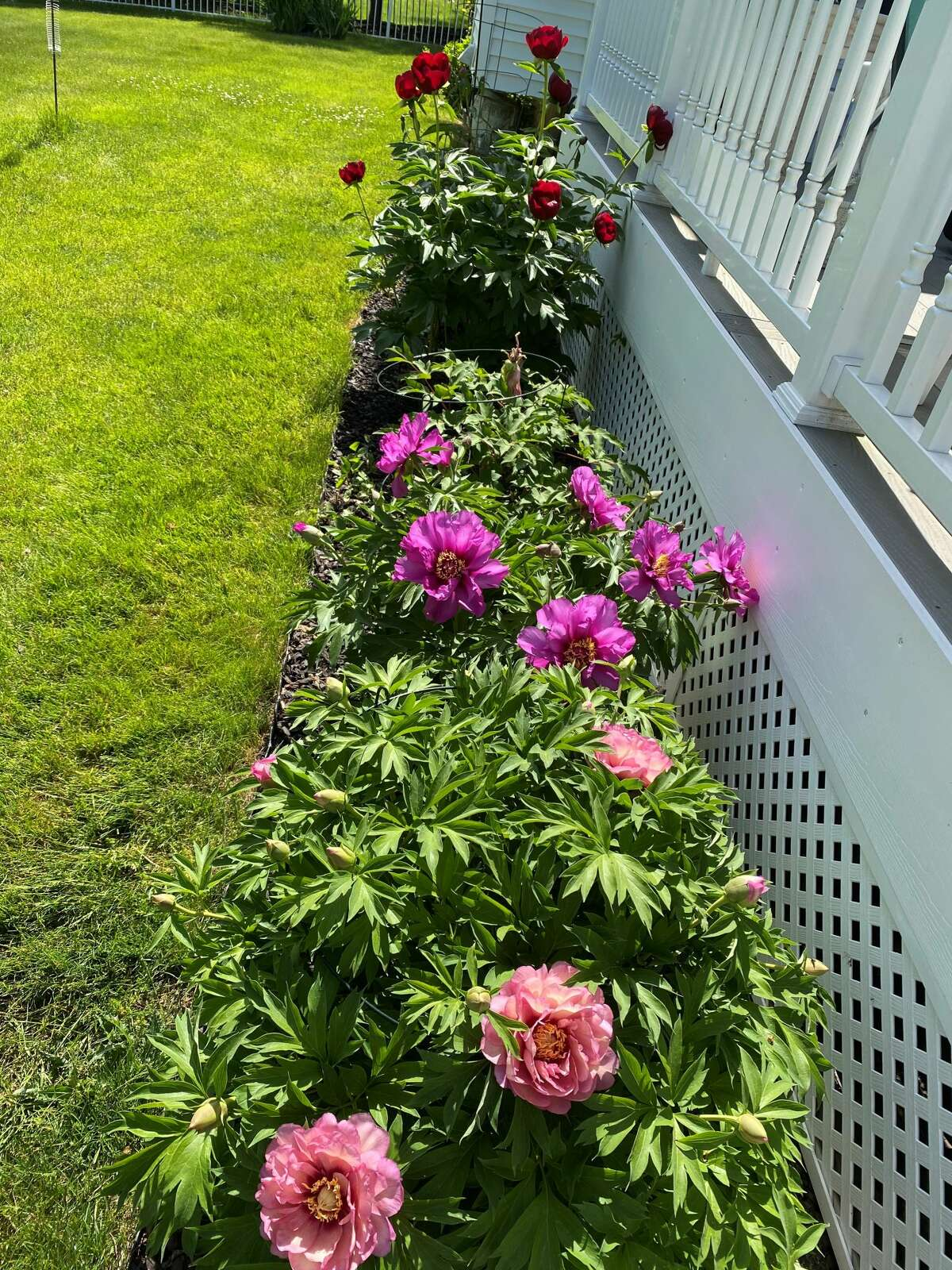 Spring time is a beautiful time for flowers. Cyndi Magenis of Guilderland, NY has the right soil and sun exposure for beautiful flowers.