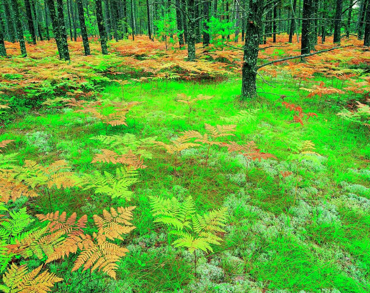 Plant it Wild will be hosting a presentation on ferns on June 16 via Zoom. (Courtesy Photo/Getty Images)