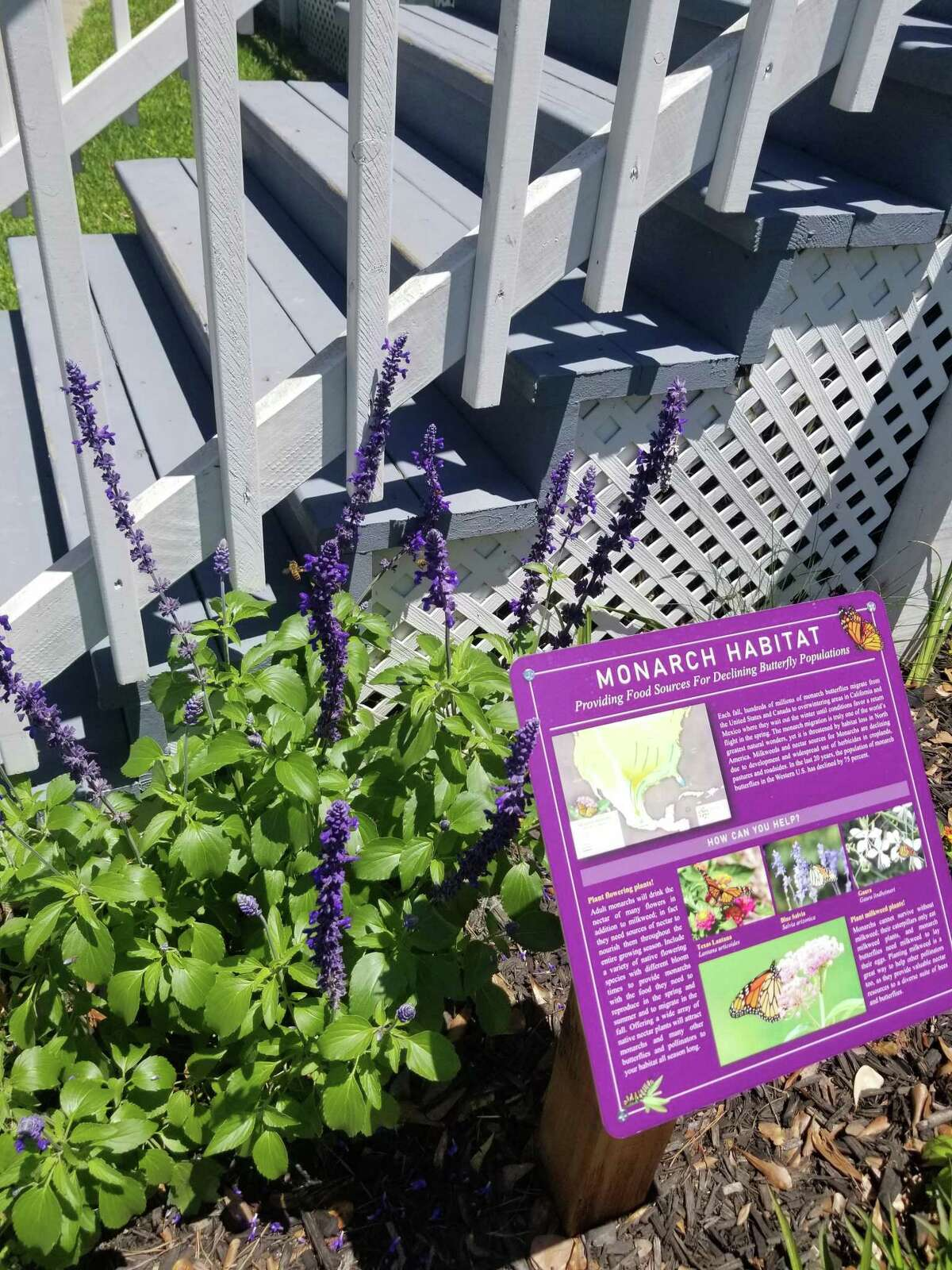 The Coushatti Trace Chapter also dedicated their butterfly garden, which was planted, in October, as part of the National DAR Day of Service. The garden has been certified and registered as an official Monarch Waystation by Monarch Watch an organization dedicated to the preservation of these amazing butterflies.